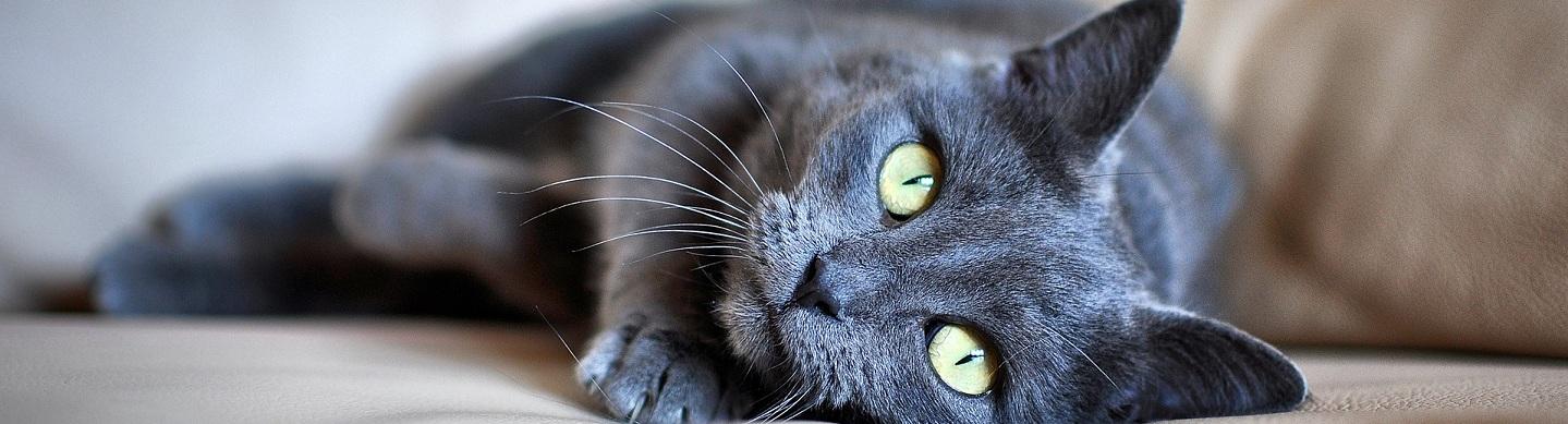 guilford slide cat